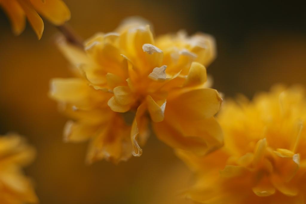 Eintauchen ins warme Gelb