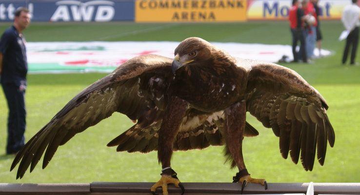 Eintracht Adler Attilla