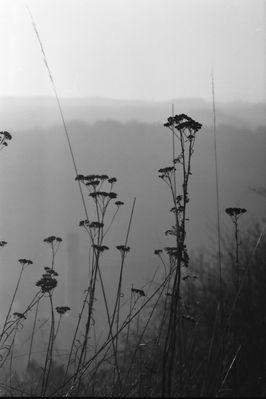Einzelne Gräser