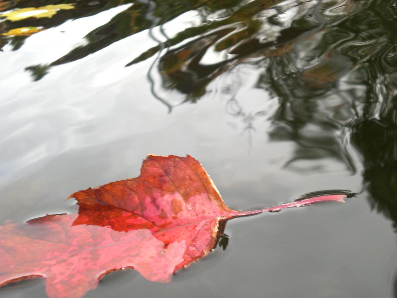 Einzelnes Herbstblatt