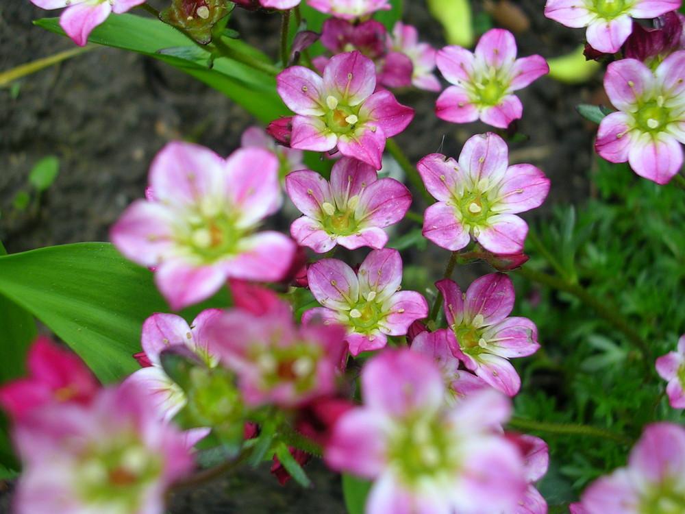 Einzigartige Blüten