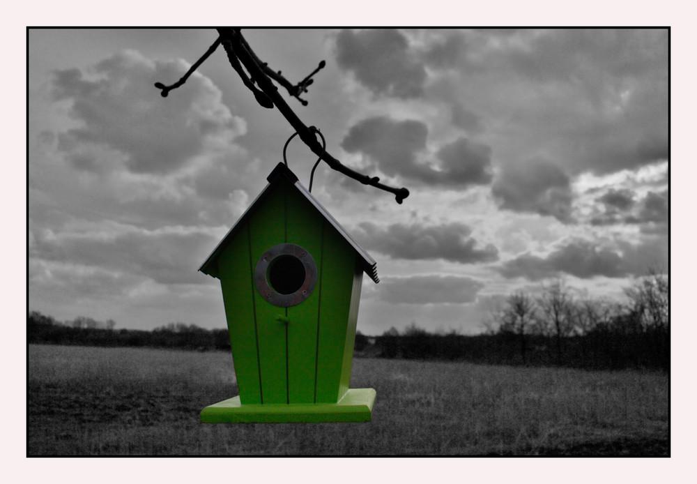 Einzimmerwohnung im Grünen