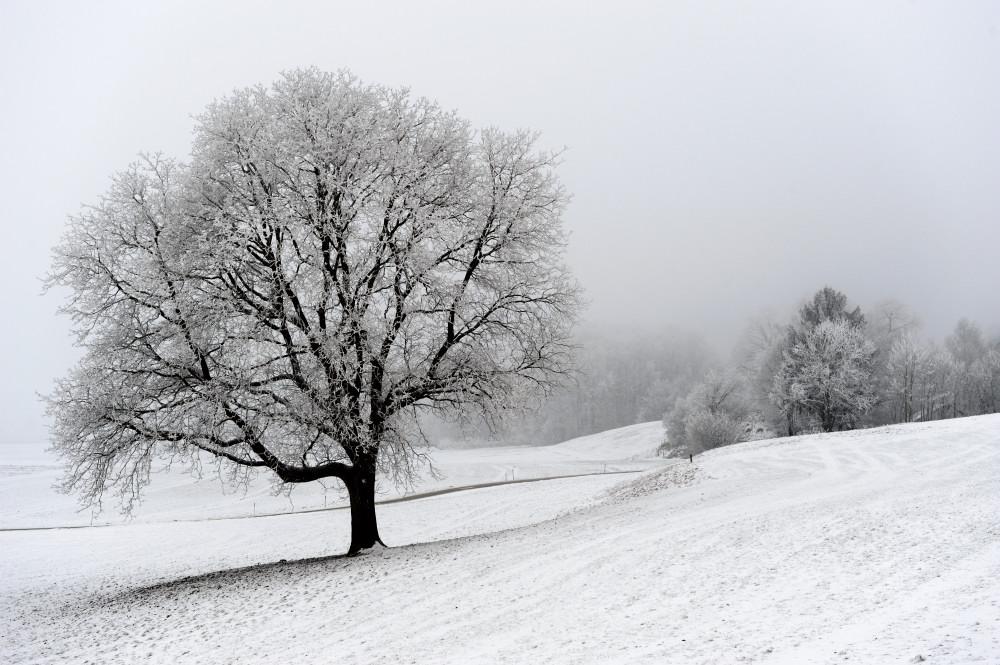 Eis am Baum 01