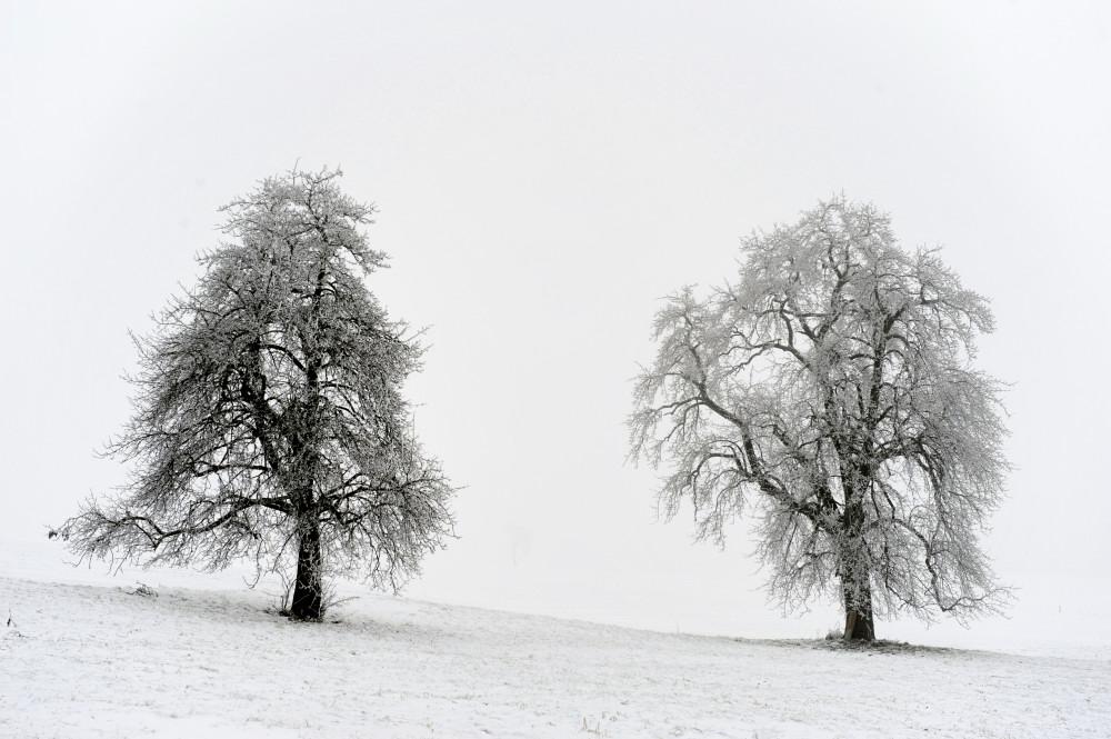 Eis am Baum 02