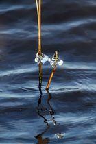 Eis am Stiel - Geschmacksrichtung: Zwischenahner Meer
