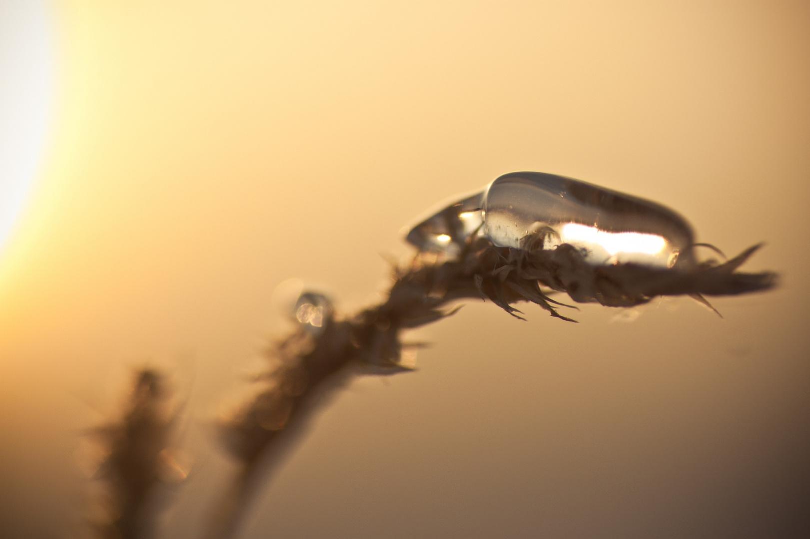 Eis auf Korn