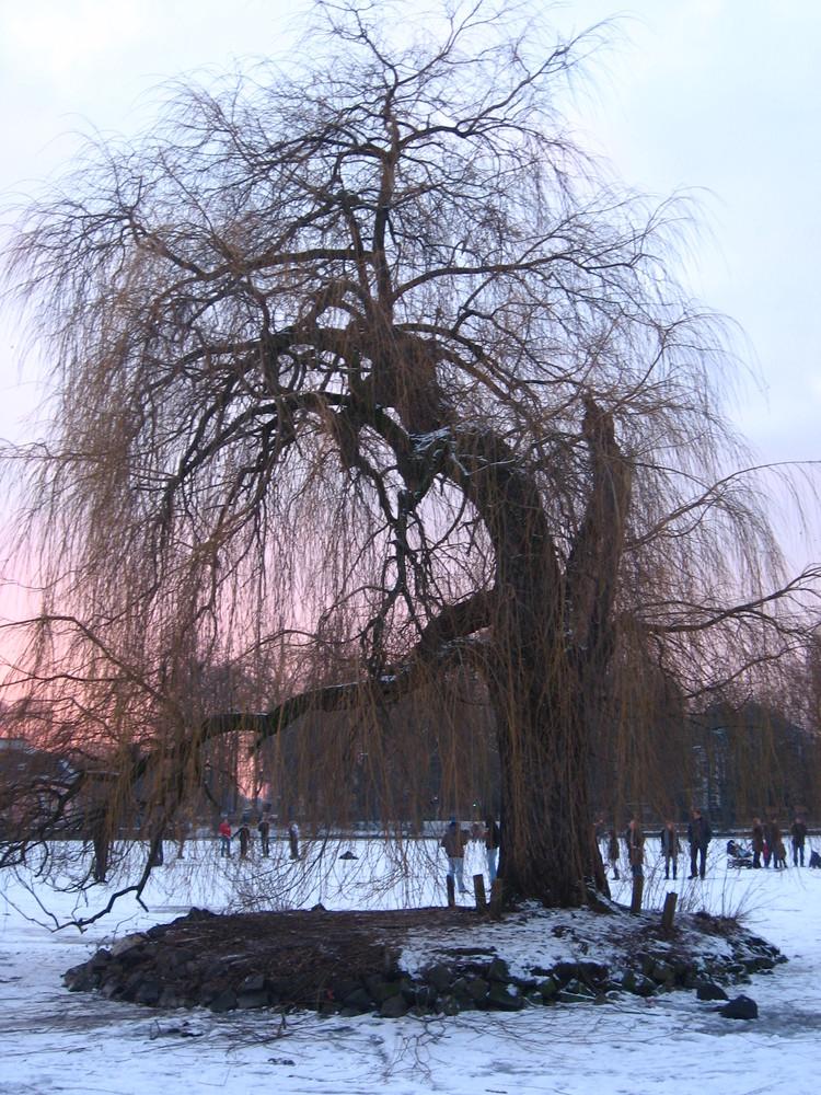 Eis-Baum im Benrather Schlosssee