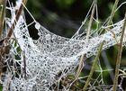 Eis im Spinnennetz