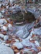 Eis im Wald