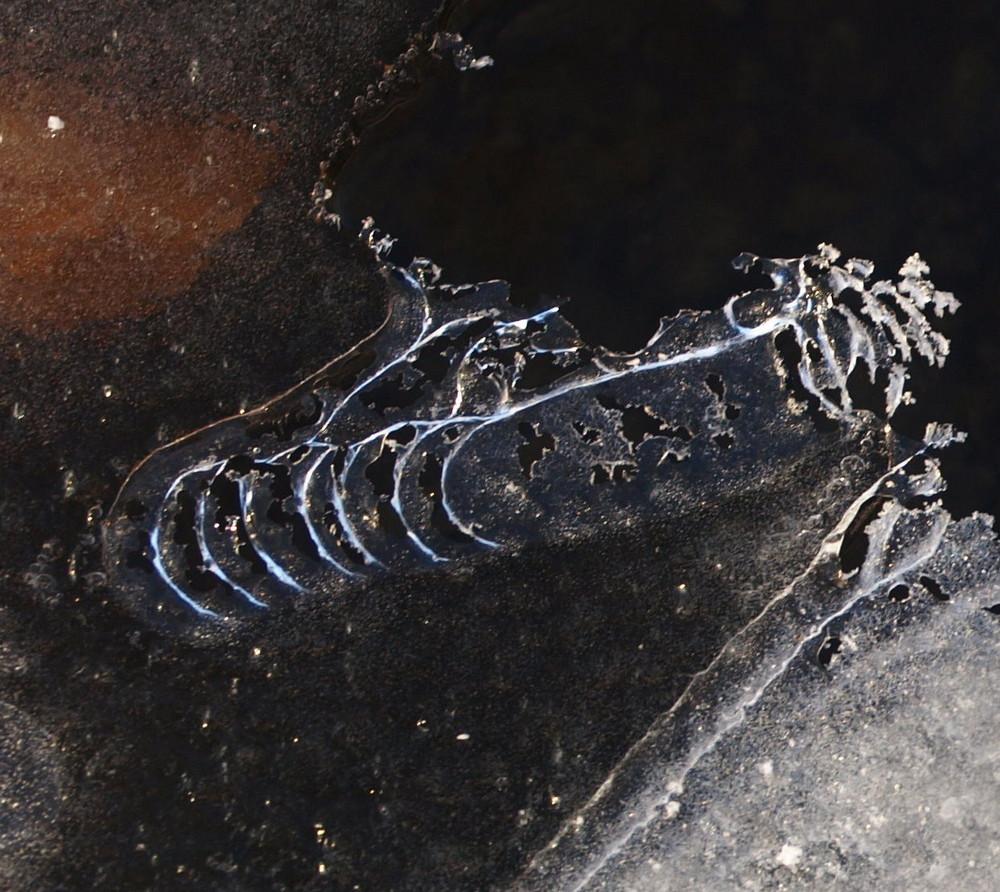 Eis-Orthoceras (Kopffüßer)