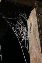 Eis-Spinnennetz