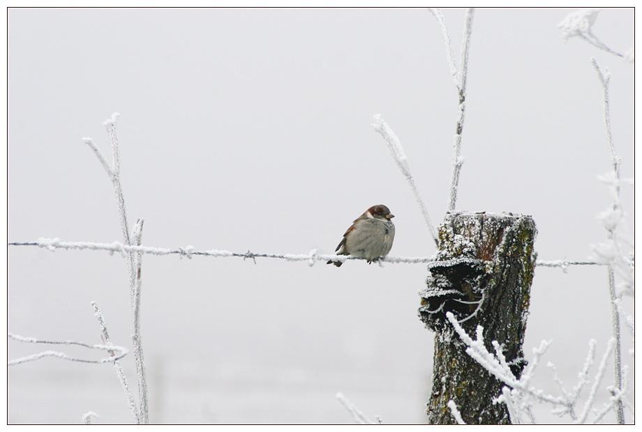 Eis-Vogel ;-)