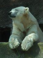 Eisbär im Nürnberger Zoo - 08/10
