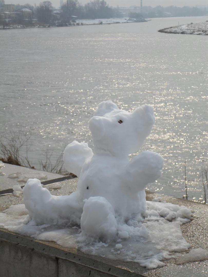 Eisbär in Dresden - Pieschen gesichtet ...