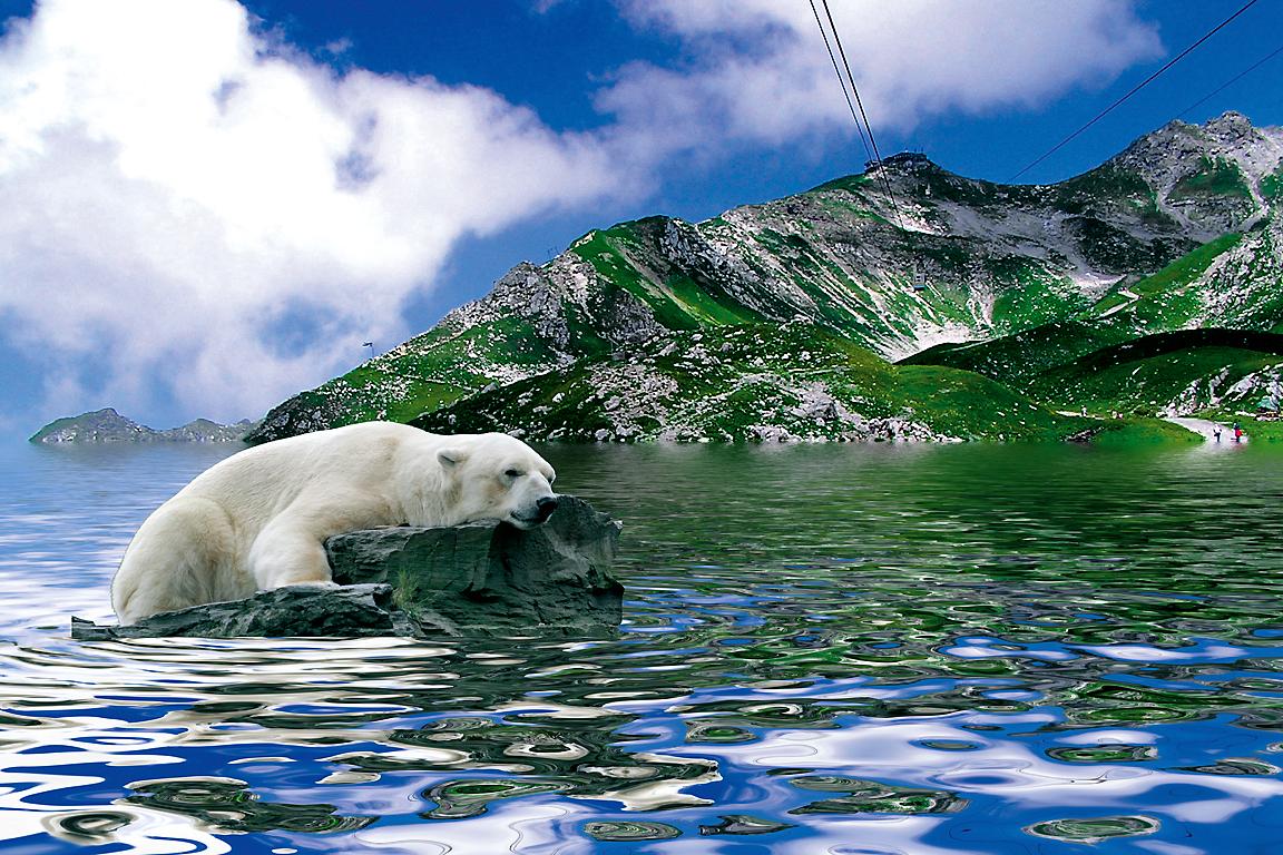 Eisbär in Österreich...