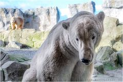 Eisbär Lloyd