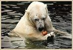 Eisbär trifft Laugenbrötchen (2)