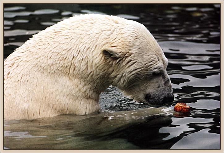 Eisbär trifft Laugenbrötchen