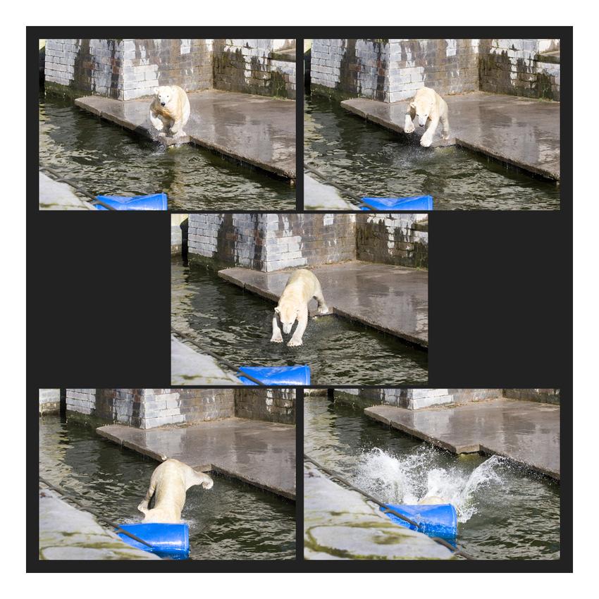 Eisbär vs Tonne