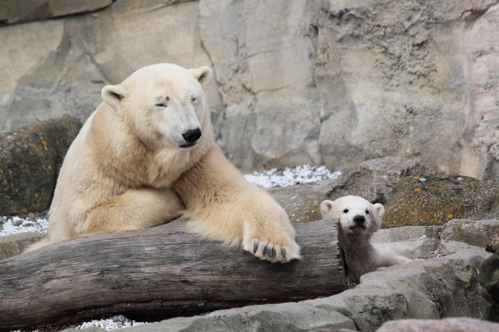 Eisbärbaby Lale mit Mutter