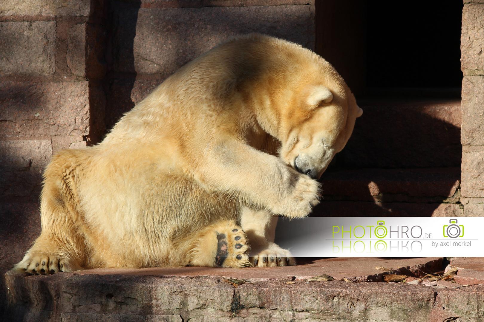 Eisbären können sich auch freuen!