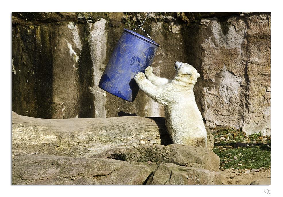 Eisbären Nürnberg III