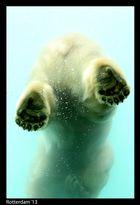 Eisbärenfüsse