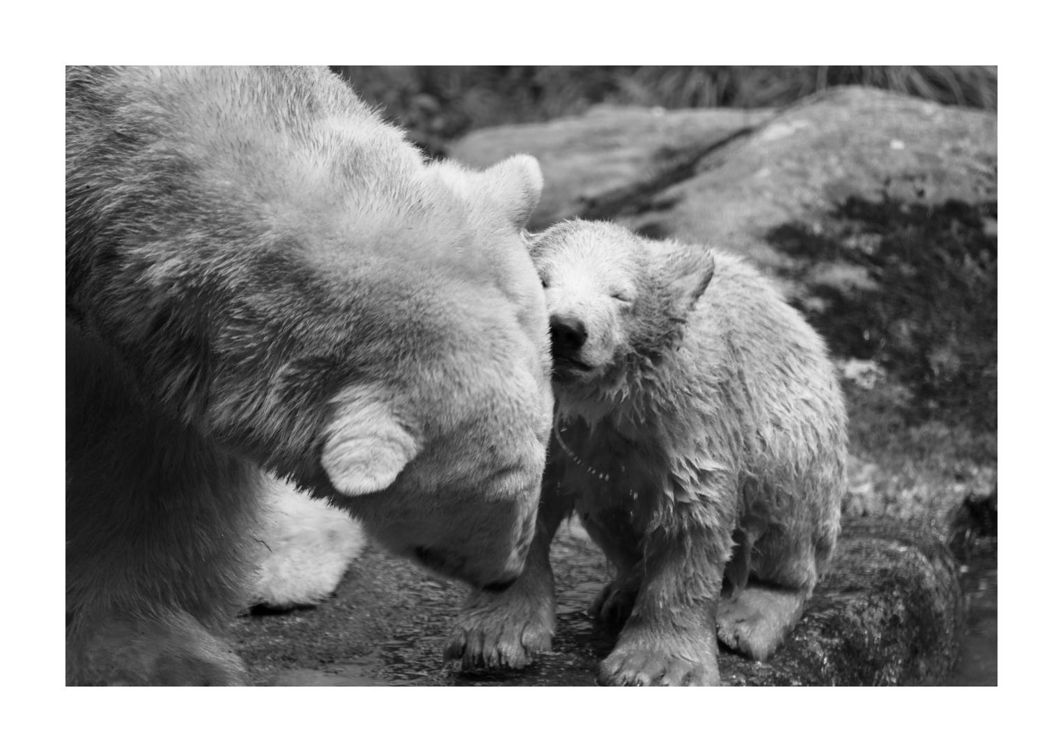 Eisbärenjunges