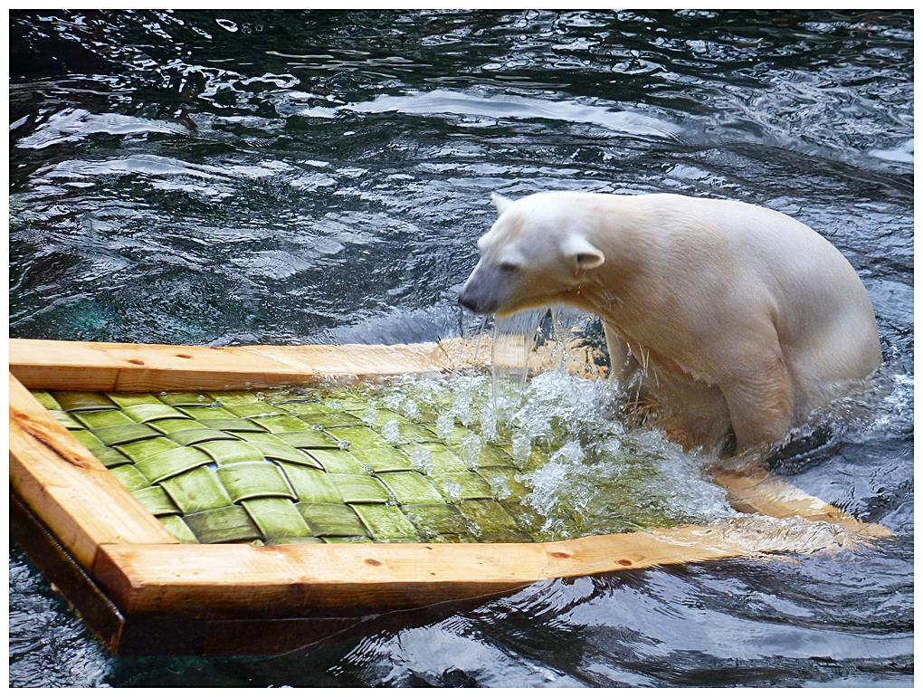 Eisbärmädel ANORI
