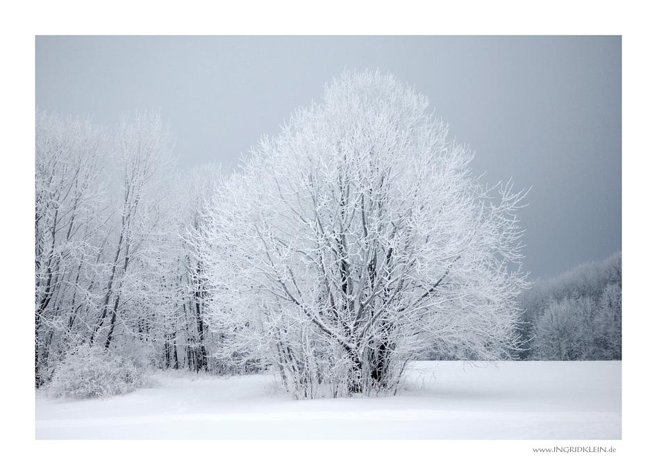 Eisbäume blühen auf der Alb...