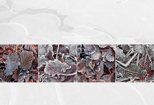 Eis.Blätter