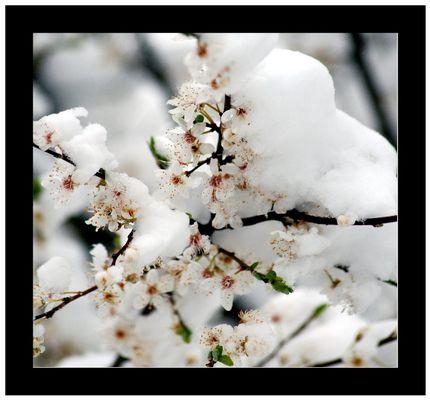 Eisblüten....