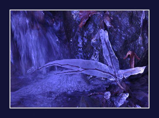 Eisblume am Bachlauf