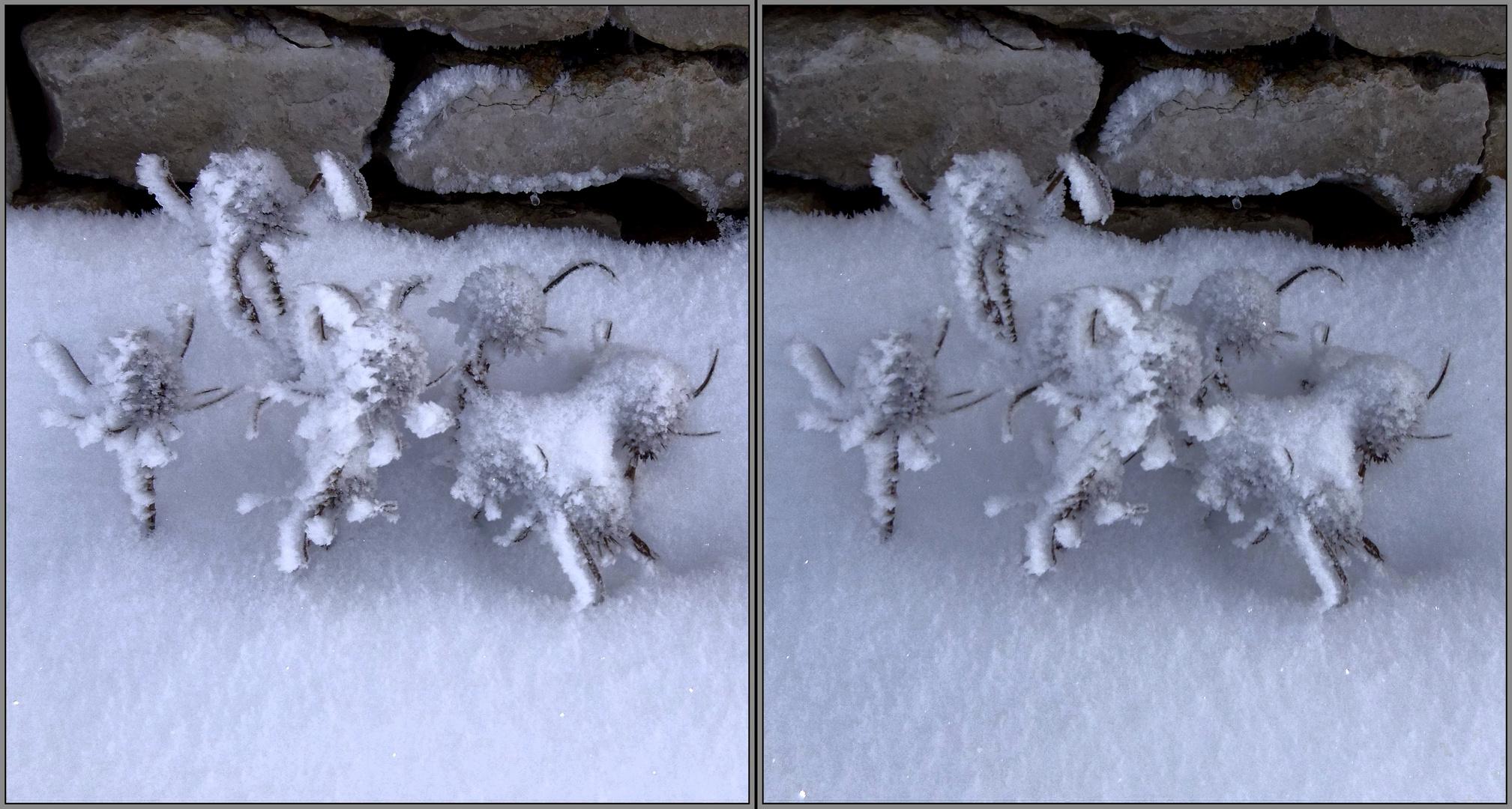 Eisblumen 3D Kreuzblick