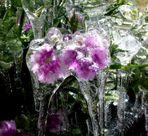 Eisblumen im Eissacktal