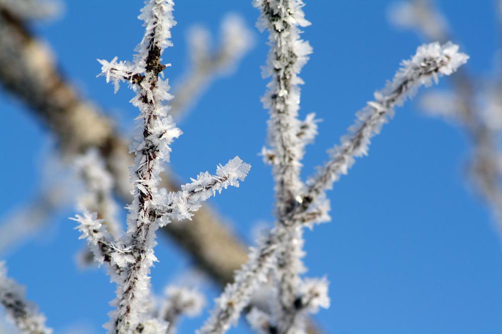 Eisblumen in der Sonne
