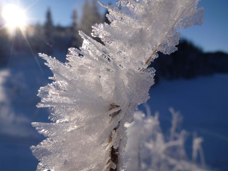Eisblumen in Strindamarka
