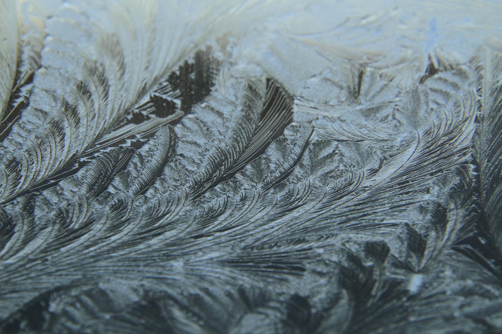 Eisblumen- oder vielmehr -farne