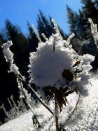 Eisblumen2