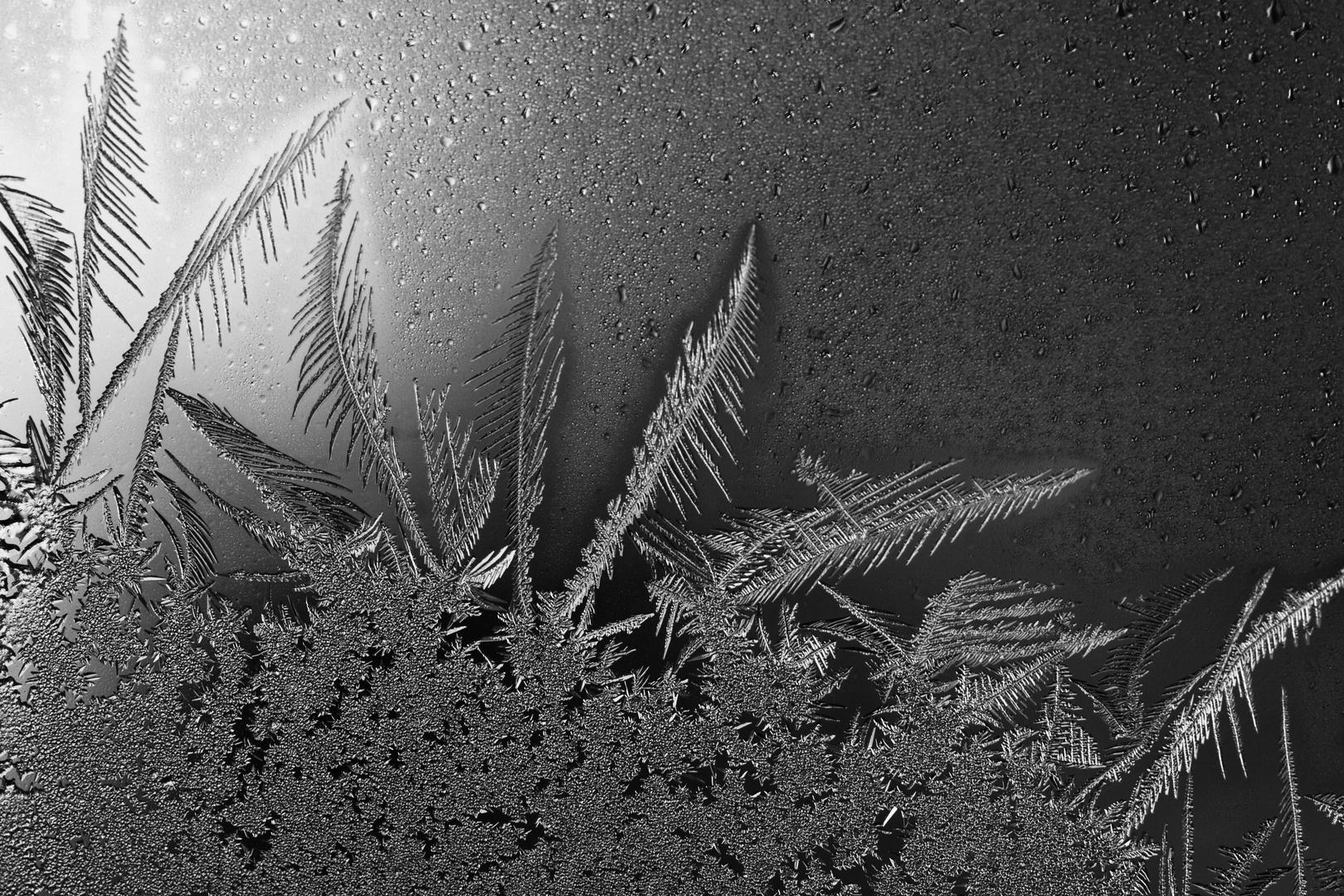 Eisblumenmakro in SW