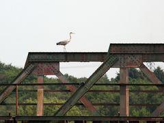 Eisenbahnbrückenreiher