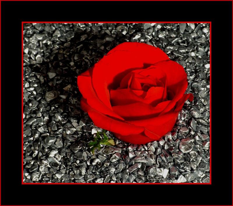 Eiserne Rose