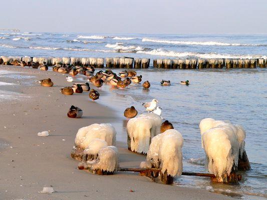 """Eiseskälte an der OSTSEE BEI BANSIN - jetzt """"läuft das Meer nicht mehr aus ;-))"""