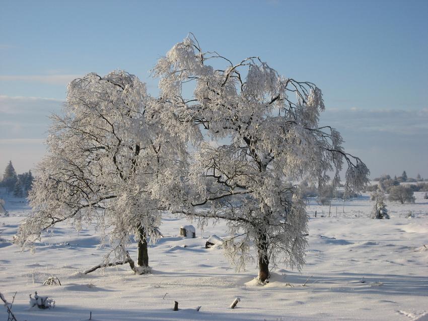 Eiseskälte im Hohen Venn im Februar