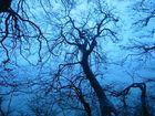 Eiseskälte im Wald