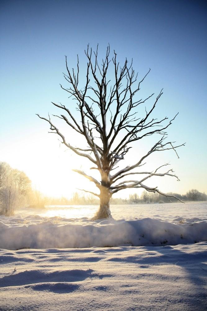 Eisig scheint die Sonne 3