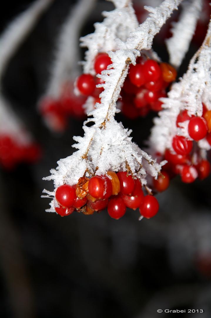Eisige Früchte