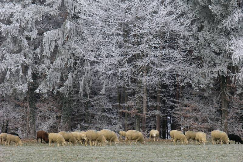 Eisige Kälte und warme Wolle