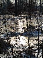 eisige Temperaturen im Auwald