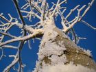 - Eisiger Baum II -